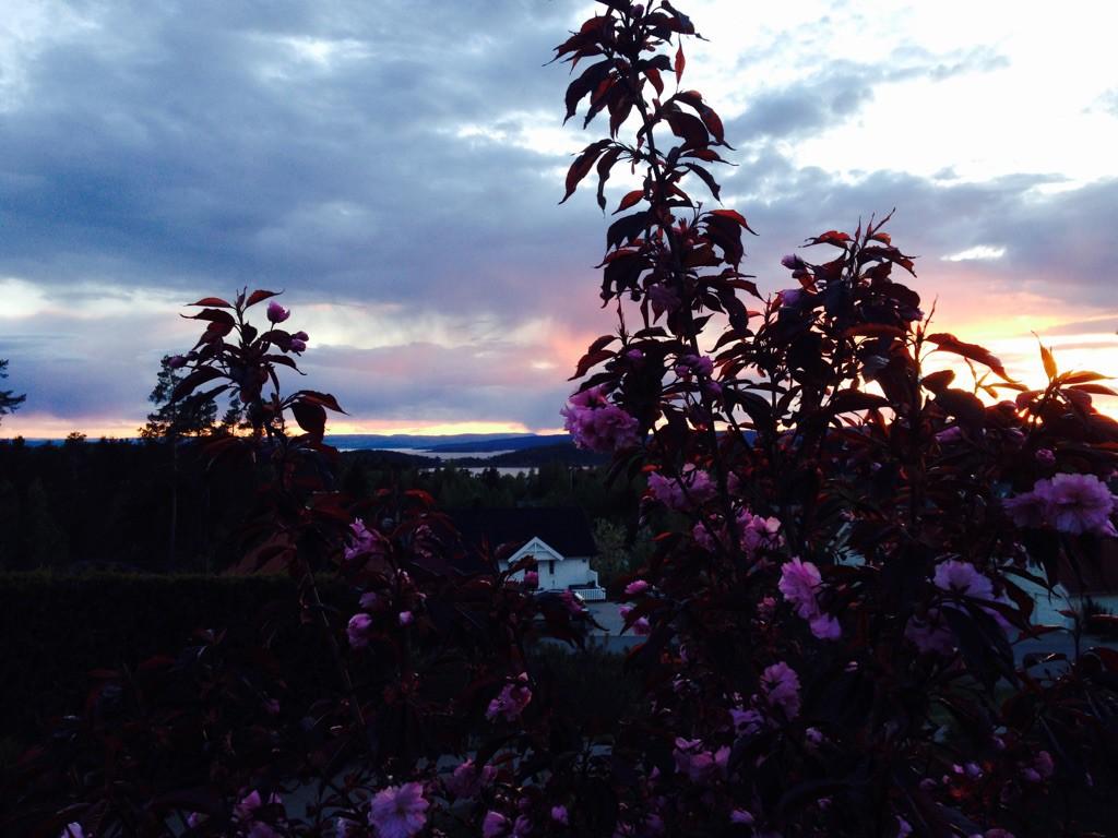 Kveld i hagen