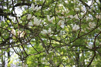 Parken har mange vakre og gamle trær
