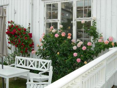 Vakre roser i Åsgårdstrand