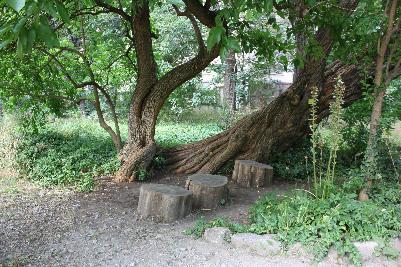 Privat område i hagen