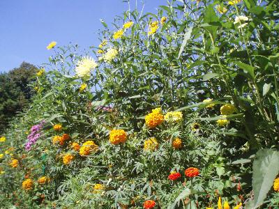 Blomster i alle farger og fasonger