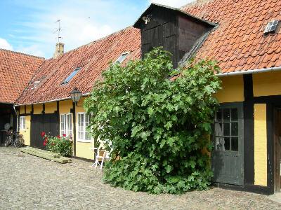 Fikentre i Bornholm