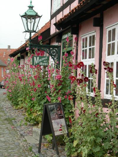 Stokkroser i Bornholm