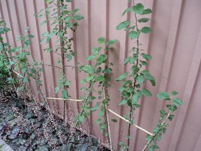 Grønne klatreplanter mot rosa vegg