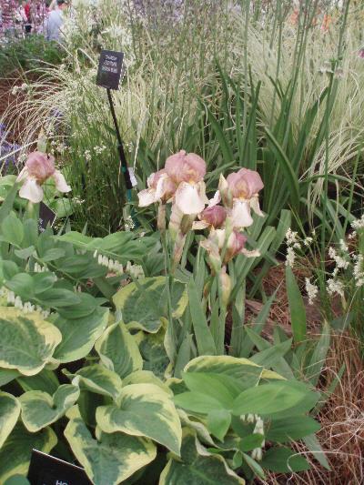 Pyntegress i kombinasjon med blomster