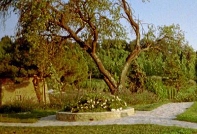 Blomster og trær i Toscana