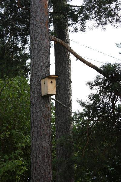 Fuglekasse gir liv i hagen
