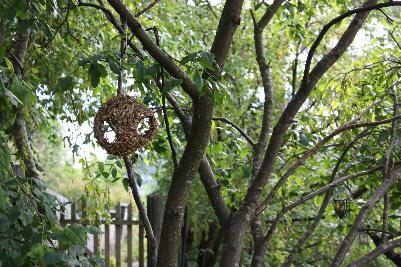 Fuglemater blant trærne