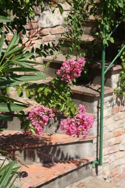 Rosa blomster mot mursteinstrapp