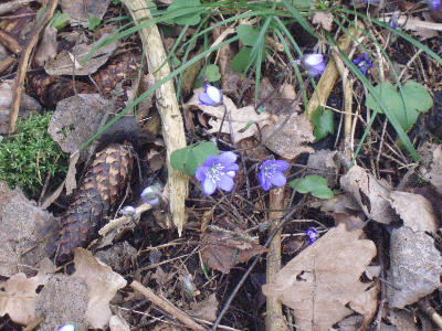 Bilde av våren