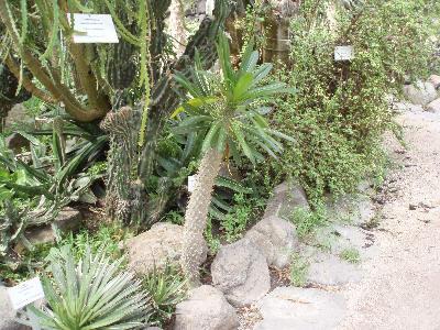 Mange typer kaktus i veksthuset