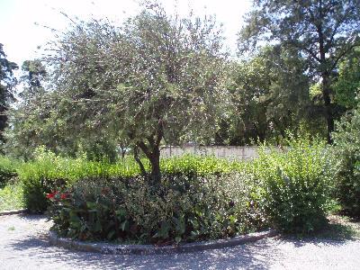 Trær og blomster i parken