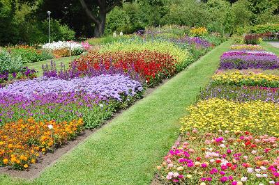 Vakre bed i Botanisk hage