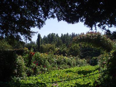 Vakkert miljø i Monets hage i Giverny