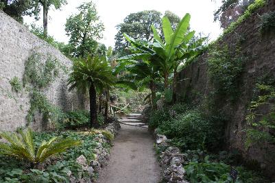 Vakkert miljø med palmer