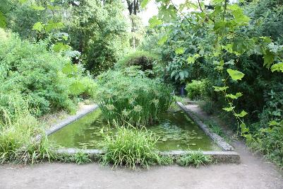Vann og planter