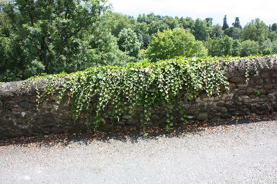 Gammel hagemur i Sauveterre