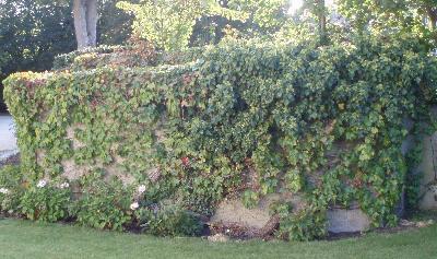 Hagemur med planter fra Saint-Germain-en-Laye
