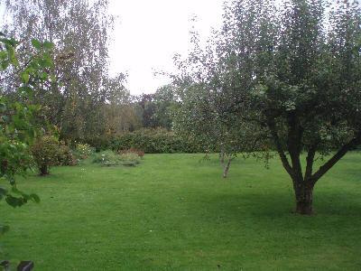 Epletrær i hagen