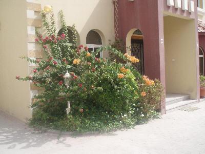 Blomsterbed i Quatar