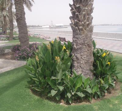 Palmer og blomster i Quatar