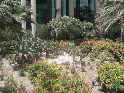 Blomsterbed i Doha, Quatar