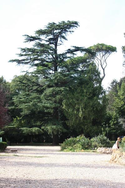 Mange nydelige trær