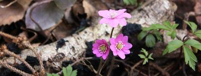 Blomster i skogen