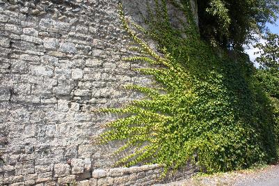 Vakker mur med planter