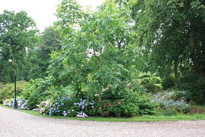 Mange vakre bed i hagen