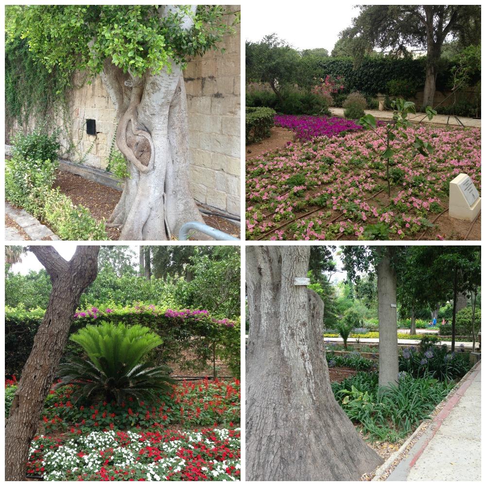 Vakre blomster og trær