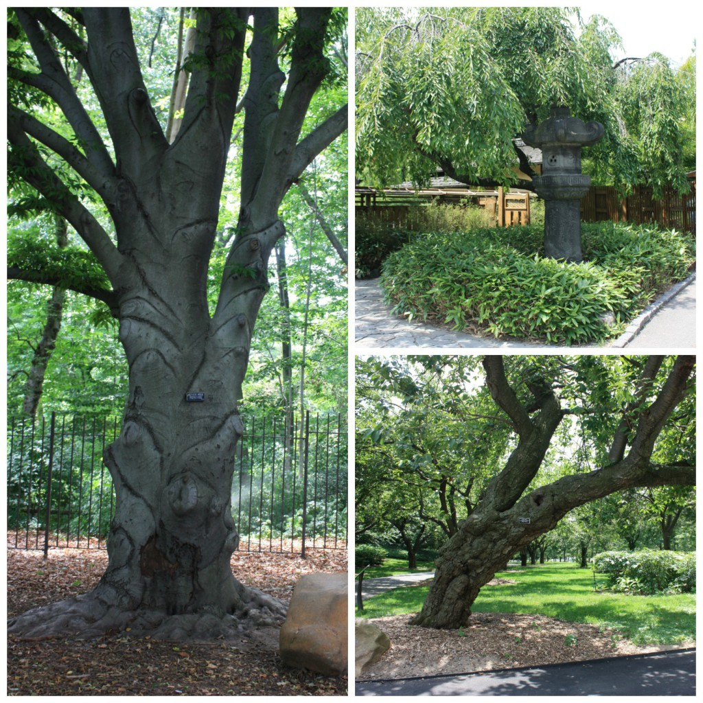 Trær i parken