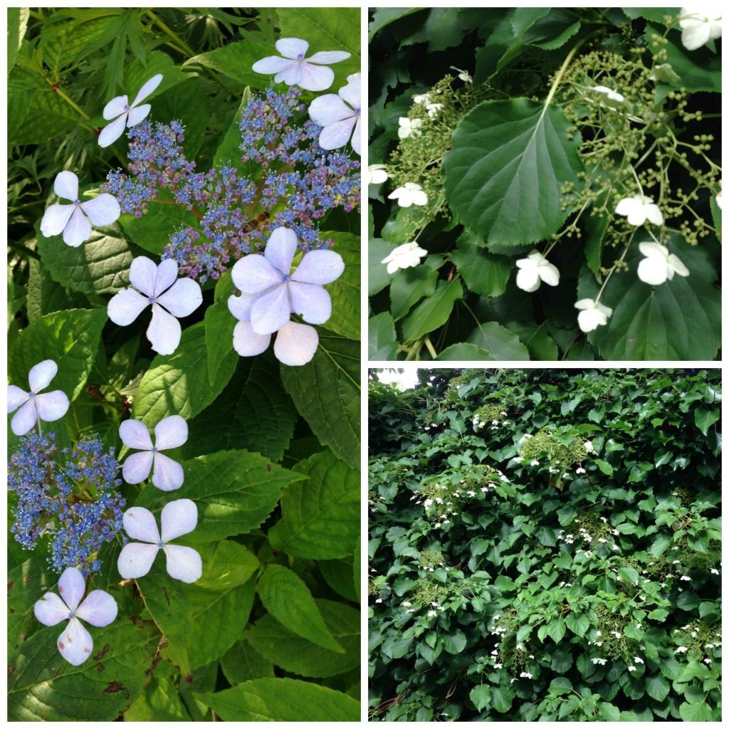 Blomstrende hage