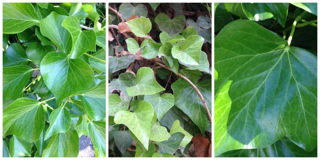 Grønn og skinnende