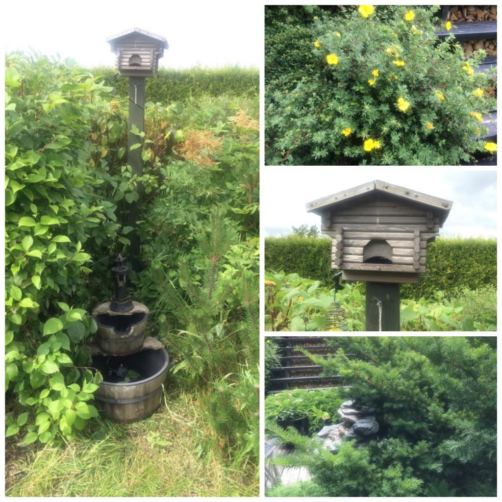 Fuglehus skaper liv i hagen