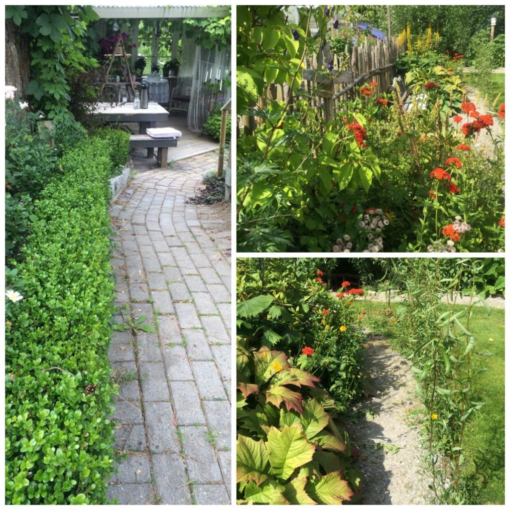 Ganger i hagen
