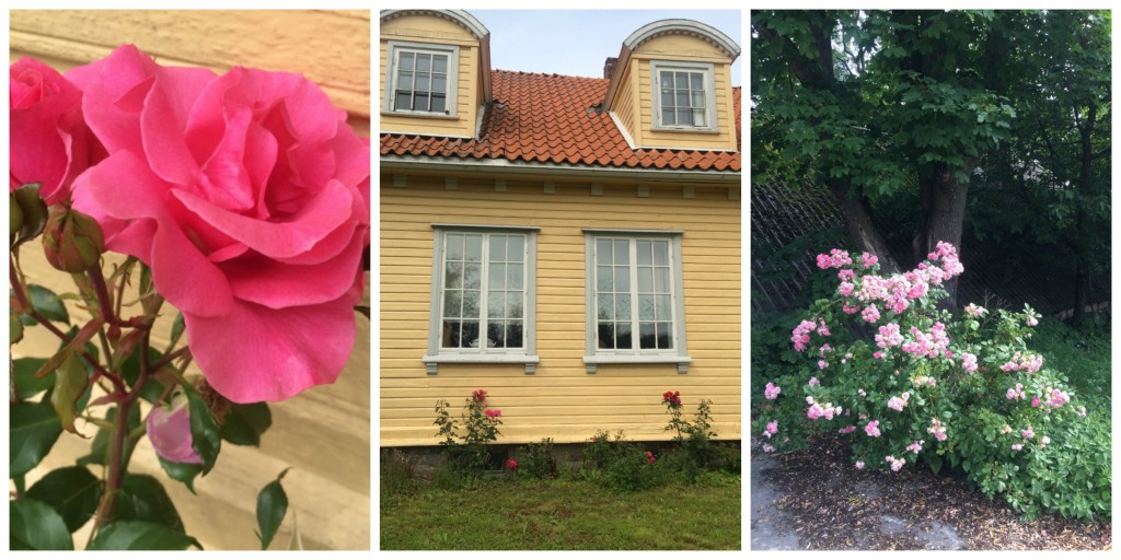 Roser på Rød Gård